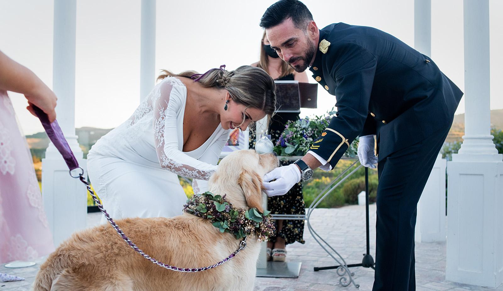 bodas con perros